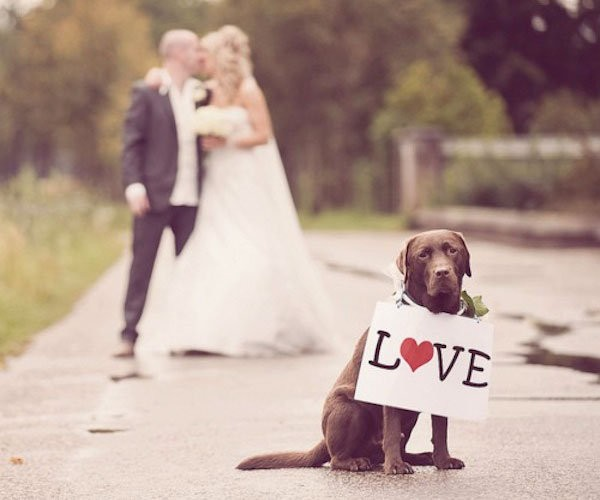 Woofs & Weddings