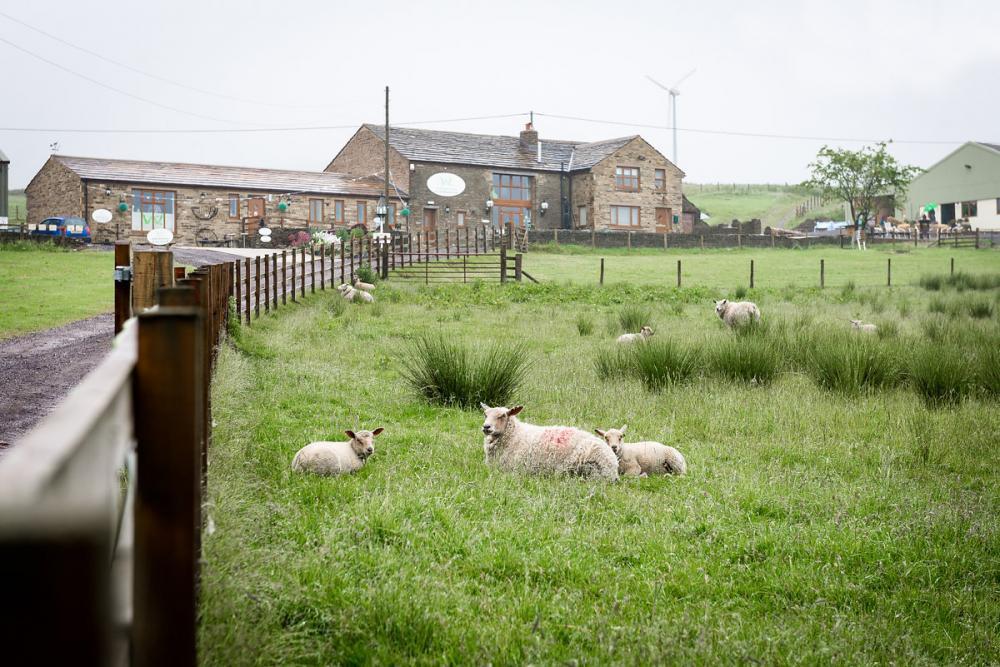 The Wellbeing Farm
